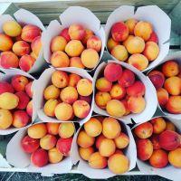 owoce kubelki